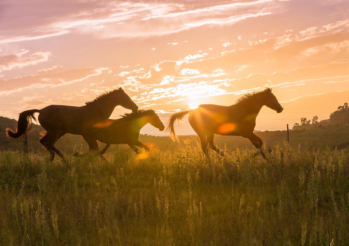 horse-tramonto